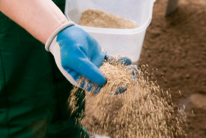how to add topsoil to your lawn