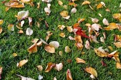 Lawn in Autumn - Rolawn Lawn Care