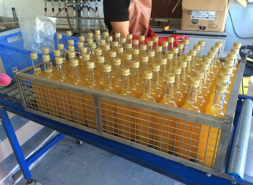 Bottles of apple juice about to be pasteurised