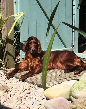 Creating a dog friendly garden