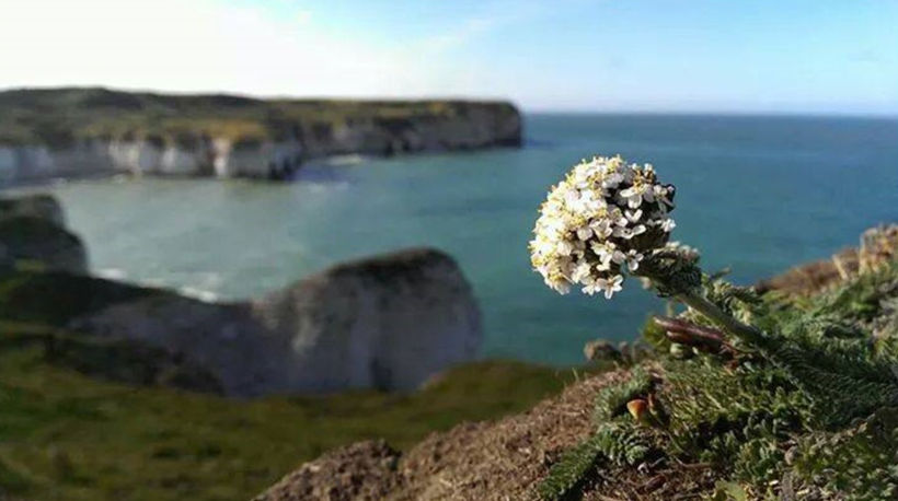 Flamborough Head, East Yorkshire