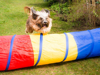 Dog agility equipment for at home
