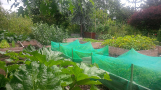 Raised vegetable beds have produced better crops with higher yields