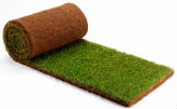 Fine-bladed, fescue greens & ornamental lawn turf