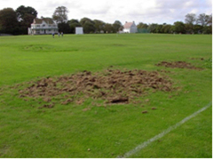 Chafer Grub Damage