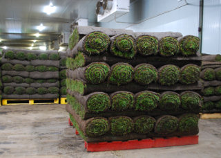 The turf awaiting despatch