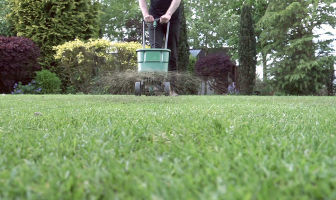 Sowing Grass Seed After Scarifying