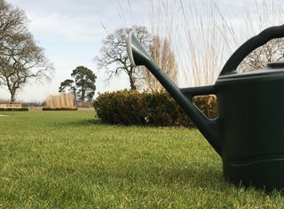 Watering Can On Lawn