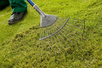 Dealing With Thatch In A Lawn