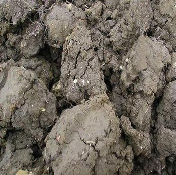 How to improve your soil for Soil improver
