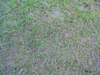 how to look after a new turf lawn