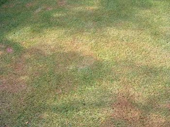 Brown patches in turf - Rolawn Info Centre