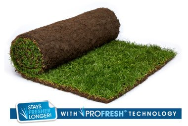 Medallion® Turf